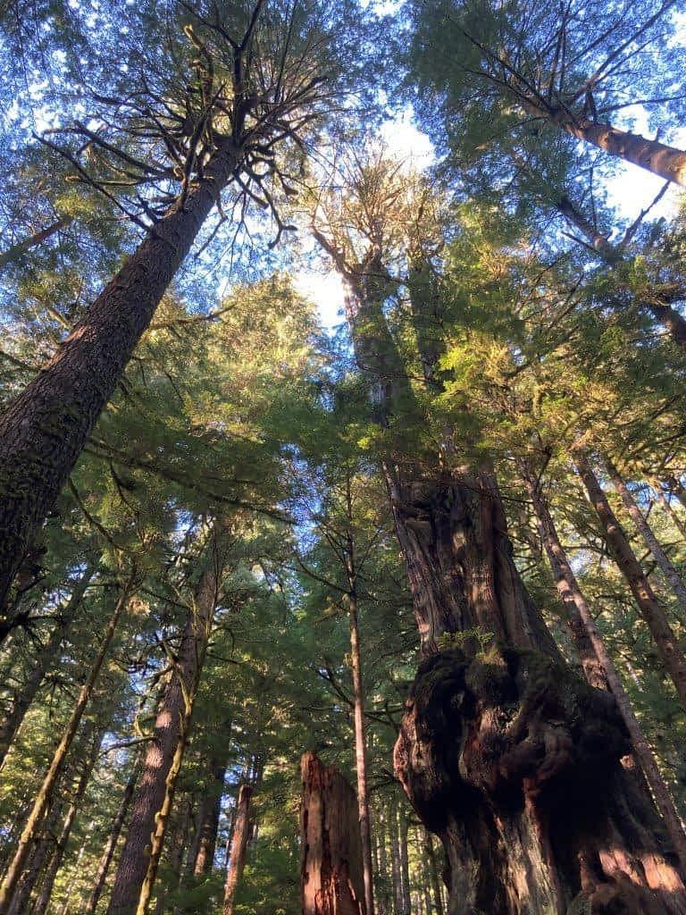 Avatar Grove BC